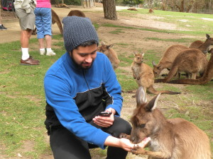 Pablo-Kangaroos-300x225
