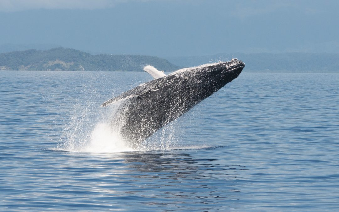 Top Destinations for Whale Watching in Australia